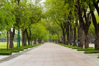 shutterstock_green path